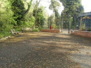area verde viale Parioli CIMG2385