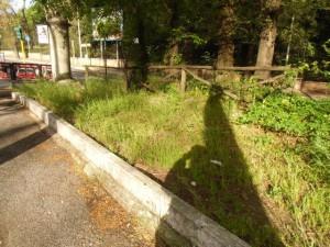 area verde viale Parioli CIMG2383